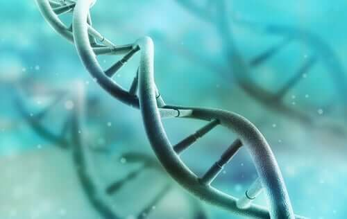 Discover How DNA Works