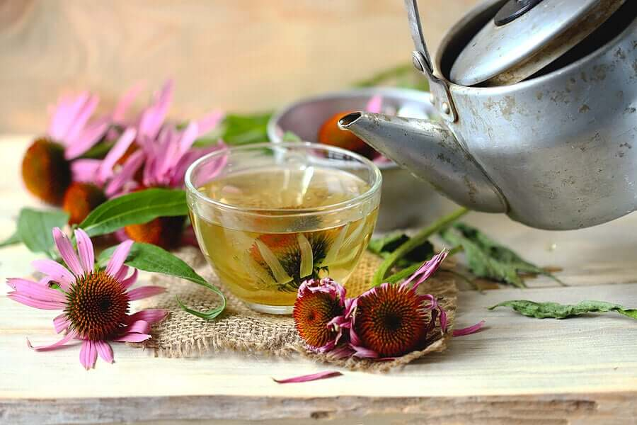 Echinacea tea.