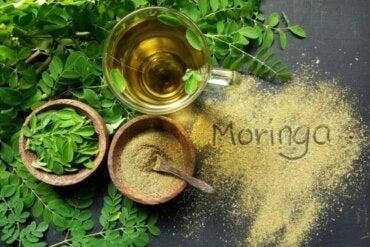 The Characteristics of Moringa Oil and Its Uses