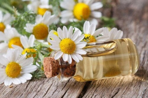 chamomile essential oil on a table with chamomile flowers