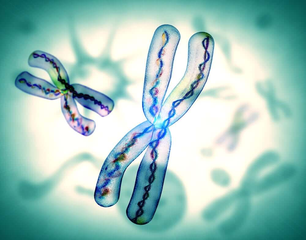 A digital image of chromosomes.