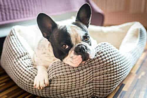 Discover 5 Pet House Ideas