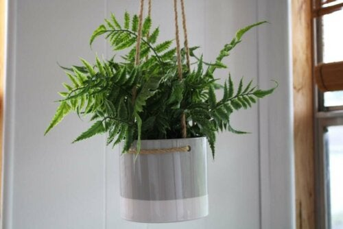 A hanging planter.