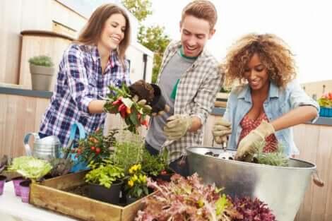 Tre personer udfører havearbejde