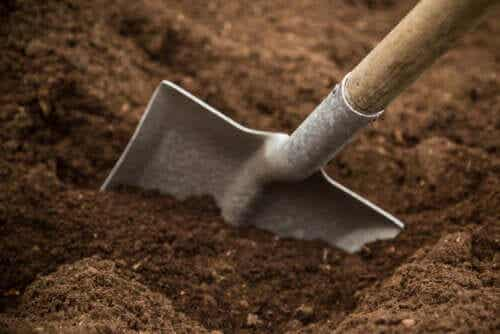 Types of Garden Soil and Their Characteristics