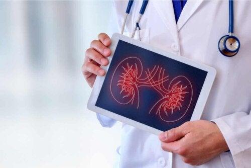 Arterielle Hypertonie - Arzt mit Zeichnung einer Leber