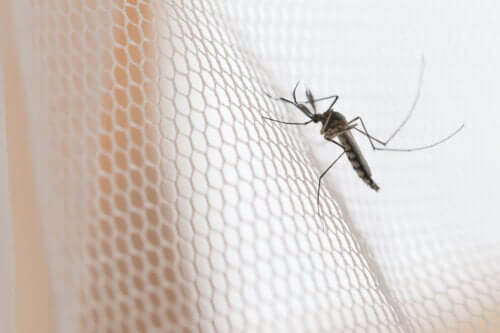 Types of Mosquito Screens and Their Characteristics