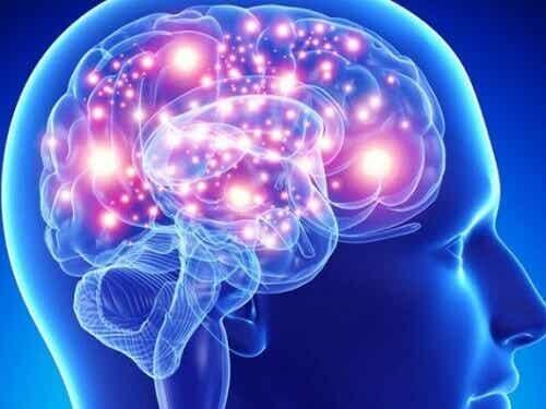 An atrophied brain.