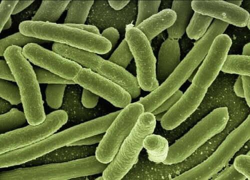 Phages to Combat Antibiotic Resistance