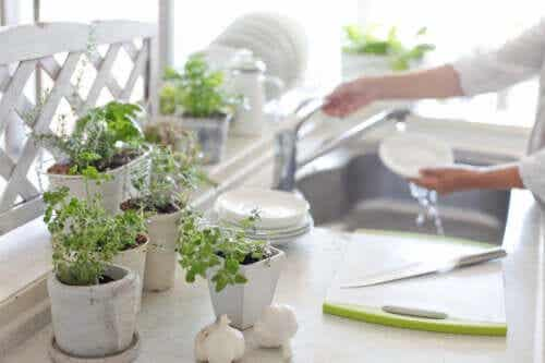 5 Benefits of Having Plants in the Kitchen