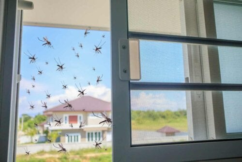 Mosquitos trying to enter a house.