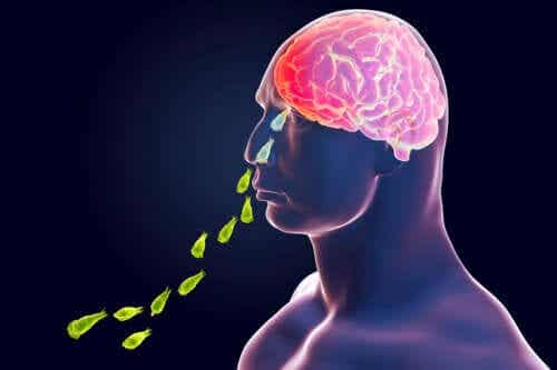 Naegleria Fowleri Infection: The Brain-eating Amoeba