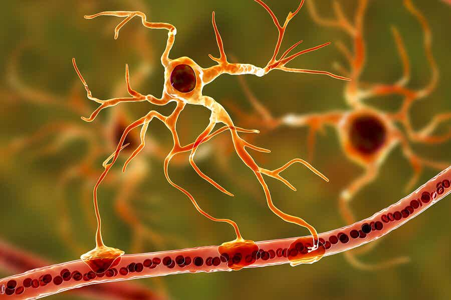 Neurons in the nervous system.