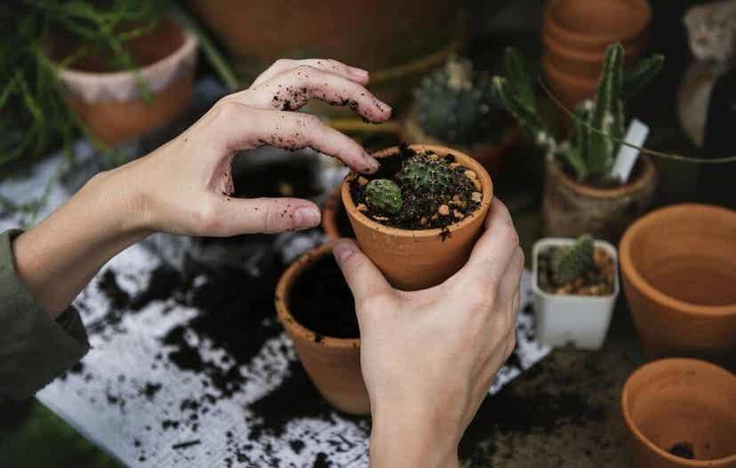 A woman planting succulents.