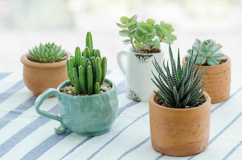 A variety of small succulent plants.