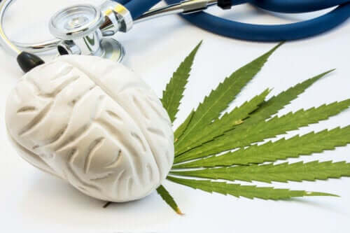 The Effects of Cannabis on the Brain