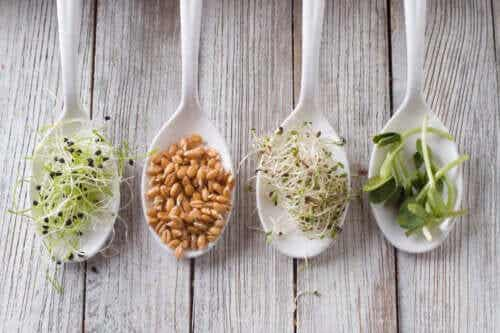 Different Sprouts: Benefits, Risks and Preparation