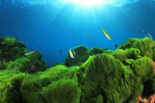 Fun Facts About Edible Plankton