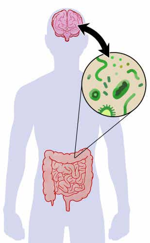 A drawing illustrating the relationship between the gut microbiota and the brain.