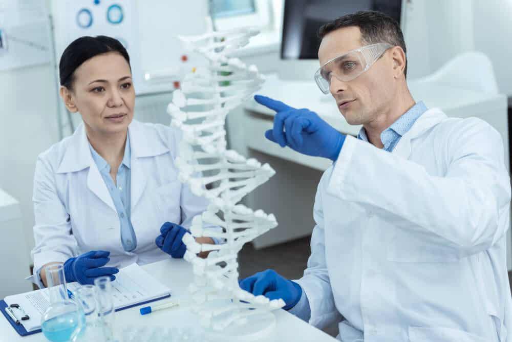 Forskere, der studerer DNA