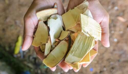 Description and Uses of Tongkat Ali Extract