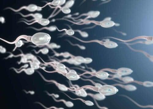 A sperm race.