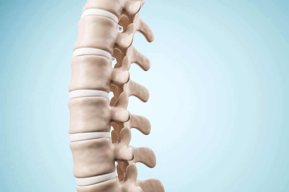 A spinal column