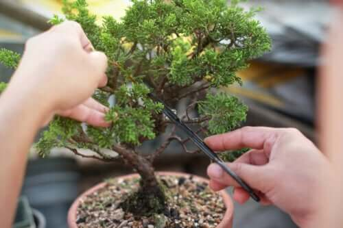 Learn How to Make and Care for Bonsai Trees