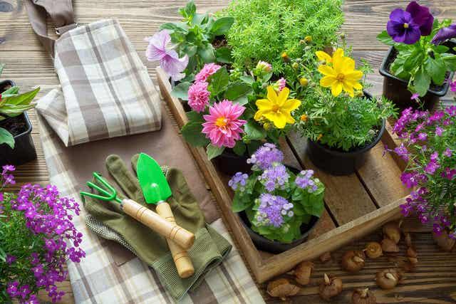 Εργαλεία κήπου δίπλα στα λουλούδια.