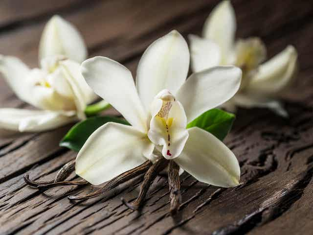 Vanilla beans and flowers.