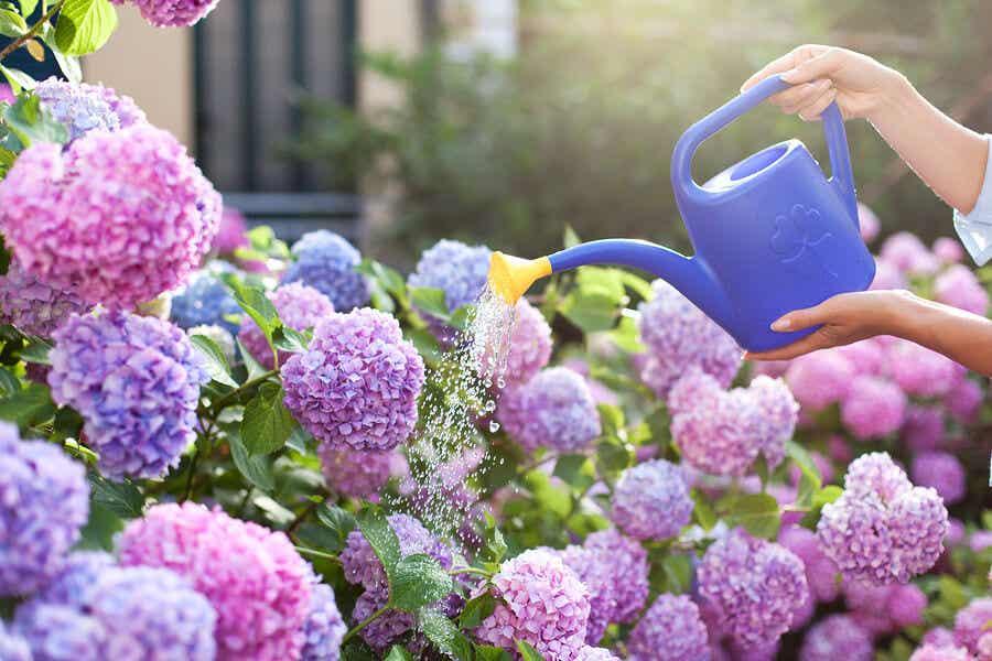 Çiçeklerini sulama kabıyla sulayan bir kadın.