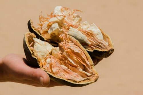 Baobab Fruit: Characteristics, Benefits, and Contraindications