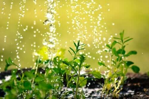 10 Tips to Avoid Wasting Water in Your Yard