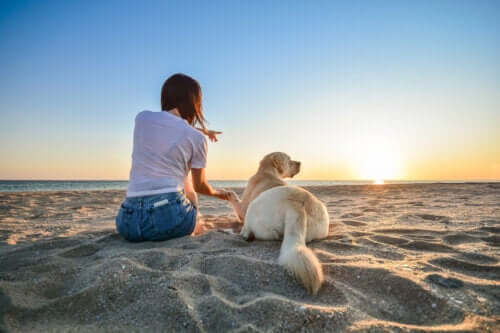 14 Things to Do When Bringing a Dog to the Beach