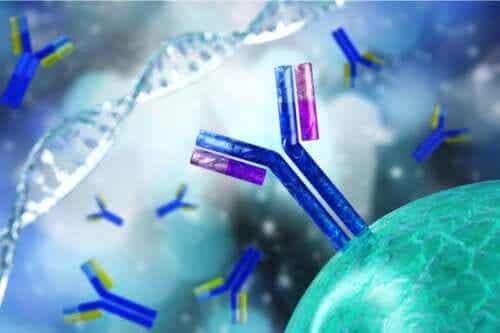 Characteristics of an Antinuclear Antibody Test
