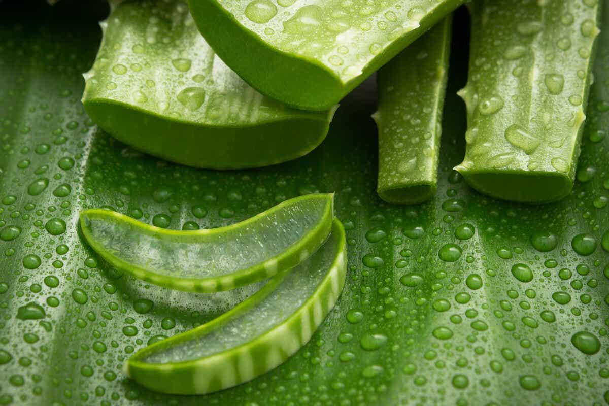 Aloe vera can help with summer sunburn.