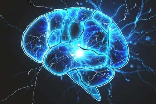 Are There Bacteria in the Brain?
