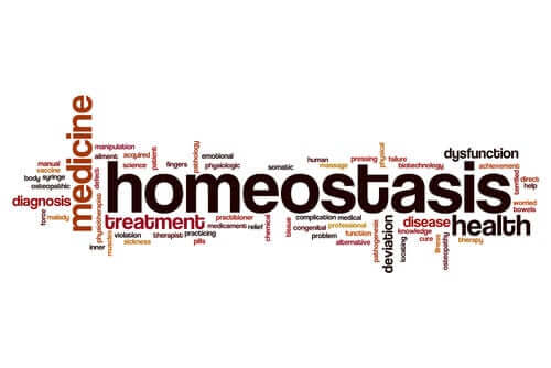 What is the Concept of Homeostasis?