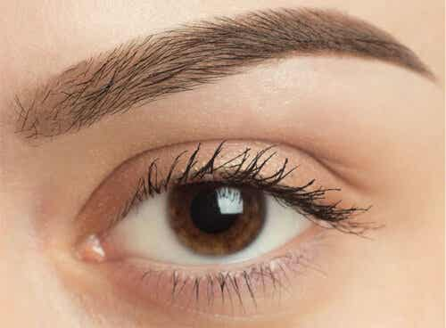 Why Does Our Eyebrow Hair Fall Out?